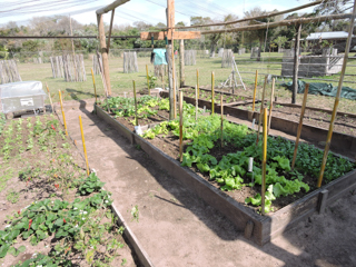 Veg plot improved